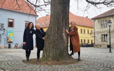 Potpora kandidaturi daruvarskog ginka za Europsko stablo 2020.