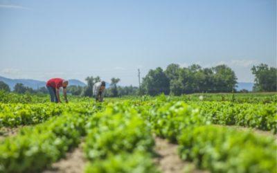 Otvoren javni poziv za pomoć poljoprivrednicima u vrijeme epidemije COVID-19