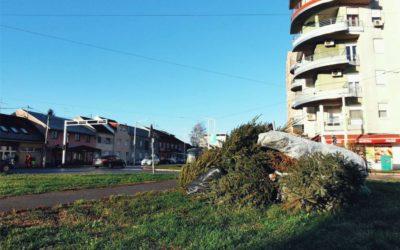 Odvoz božićnih drvaca u Osijeku