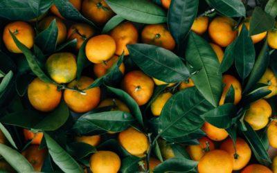 Mandarine iz zlatne doline stižu i u Osijek!